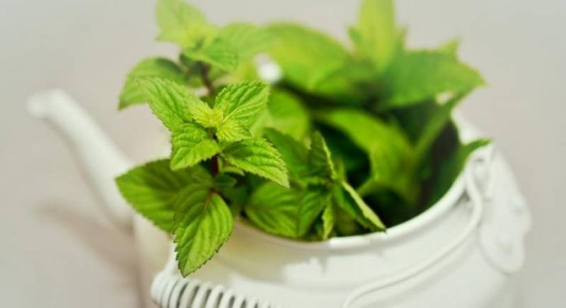 The abundant health benefits of mint leaves